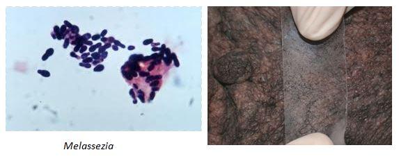 skin-smear-images