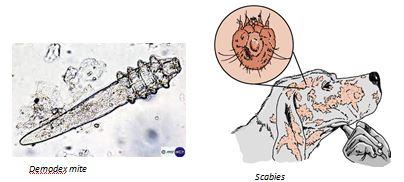 skin-scrape-image