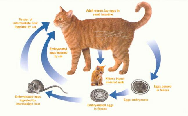 Cat Vomiting Whole Food