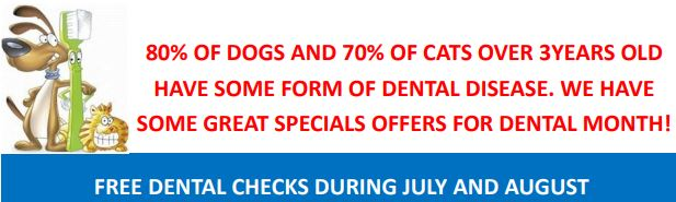 Free Dental Checks during July and August