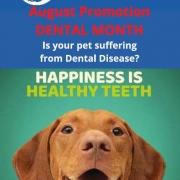 August 2021 Dental Month